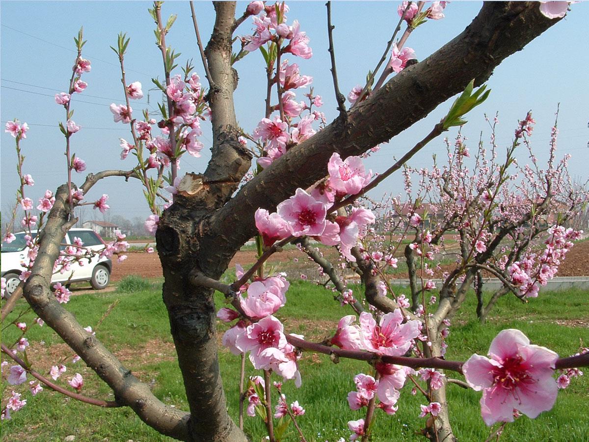foto_fioriture
